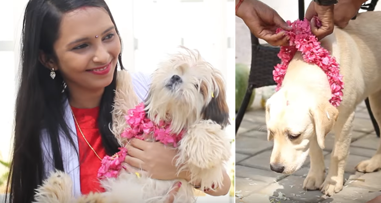 kukur tihar - celebrating the dogs
