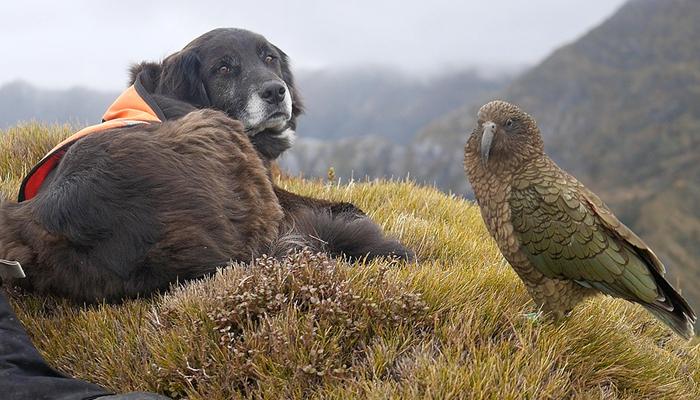 ajax and kea together