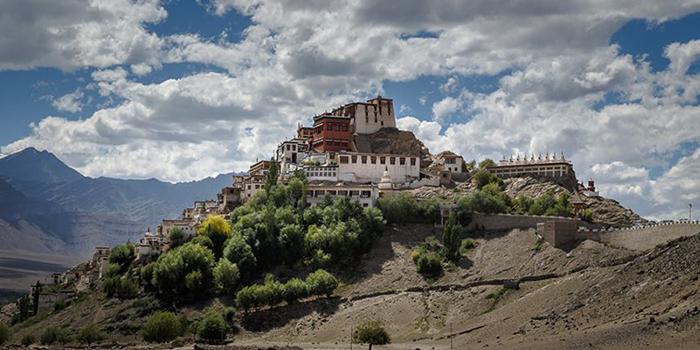 ladakh tree plantation monks