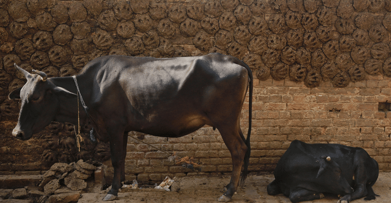 Rajasthan Is Literally Doing Business Out Of Shit, Earning Lakhs From Cow Dung To Make Poop Paper