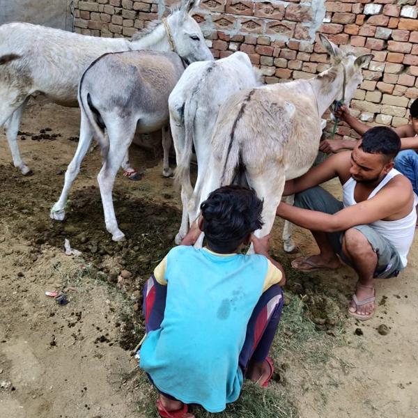 organiko donkey milk soaps