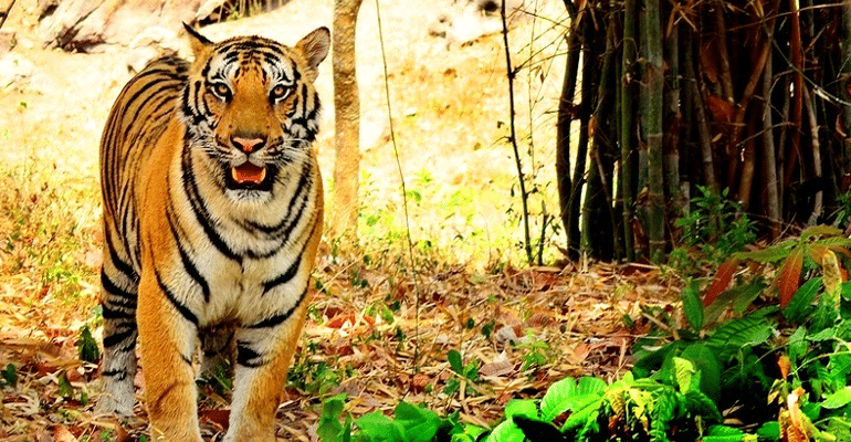 5 Must Visit Wildlife Sanctuaries And National Parks Around Bangalore