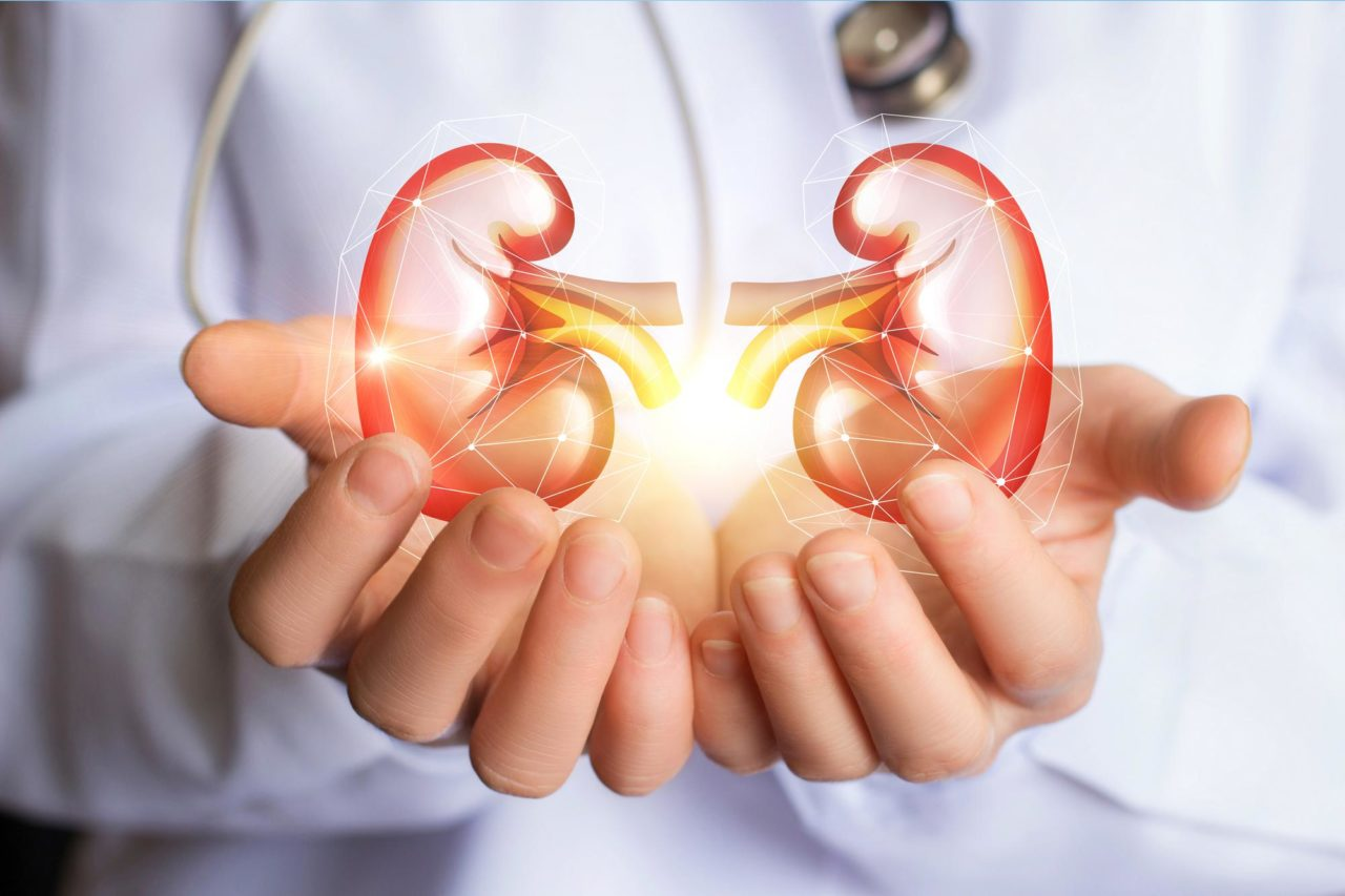 How To Improve And Maintain Kidney Function For A Healthy Life