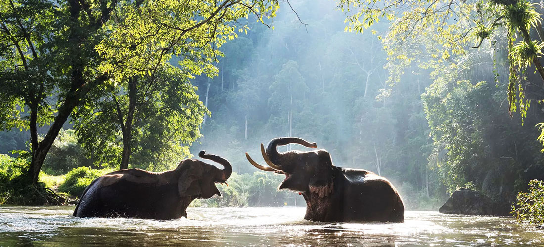 7 Mesmerizing Waterfalls Near Bangalore Worth Visiting