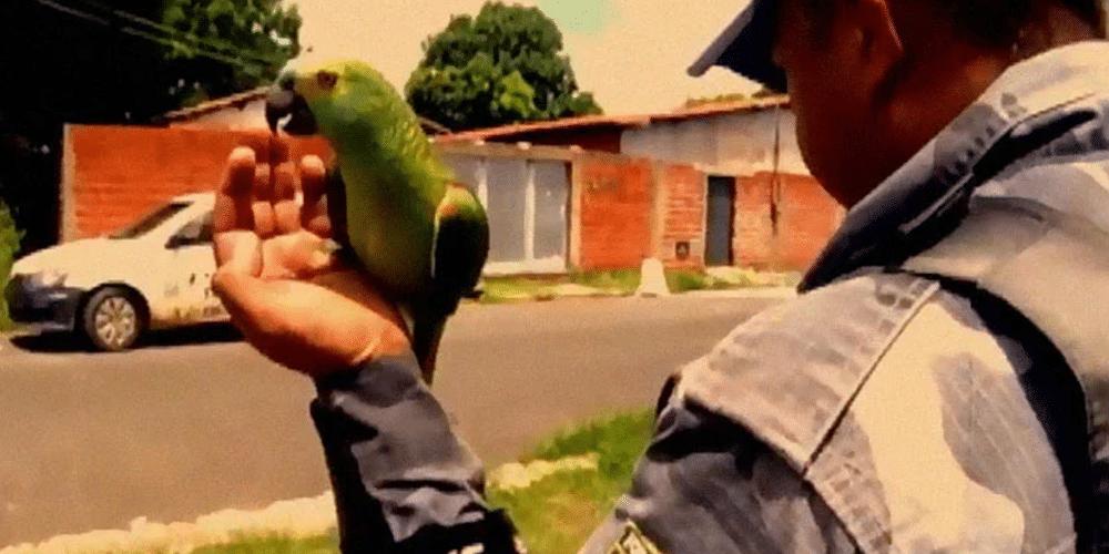 bird arrested for crime