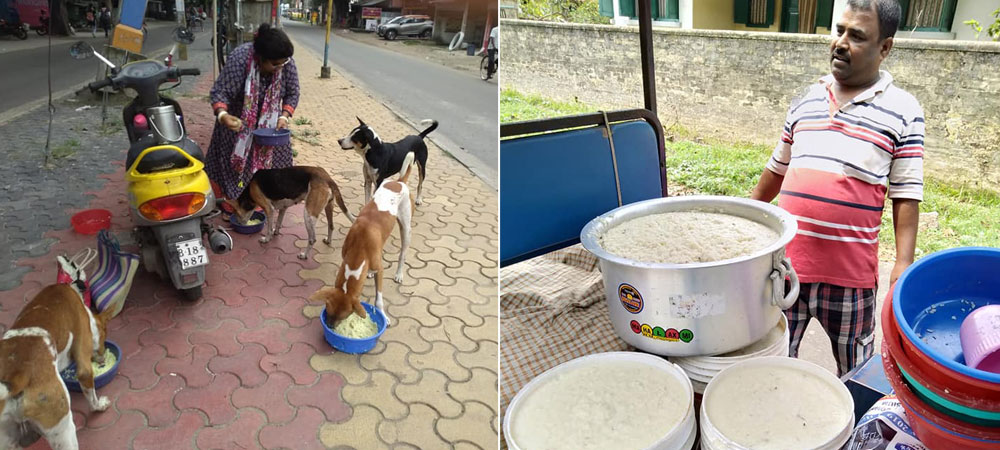 What This Homemaker Has Done For Her Husband's Love For Street Dogs Is Aww-dorable