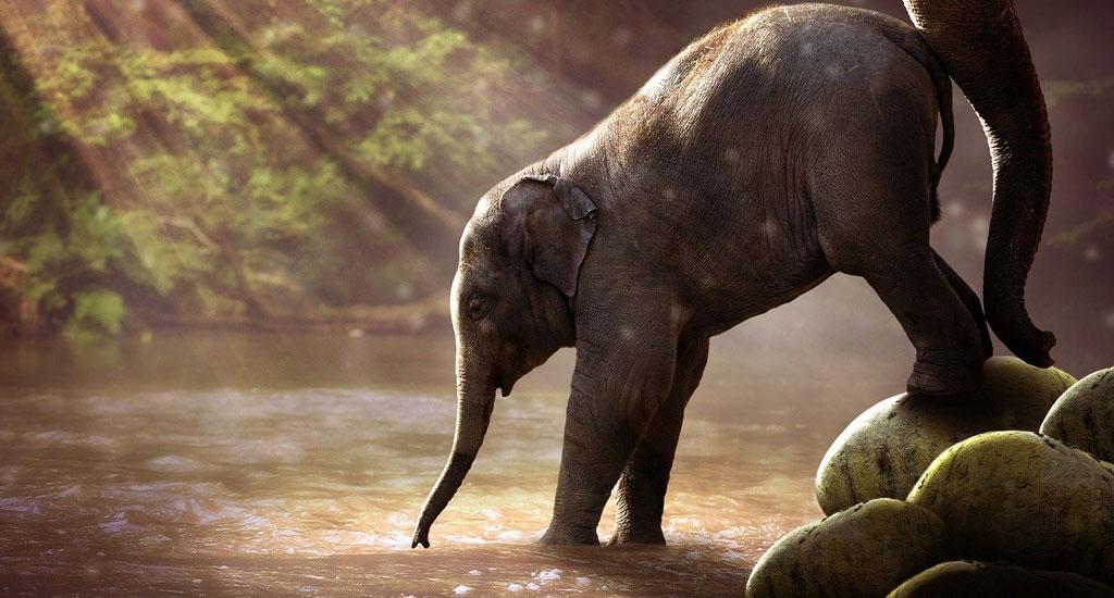 Wildlife Sanctuaries In Karnataka